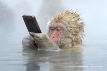monkey cell